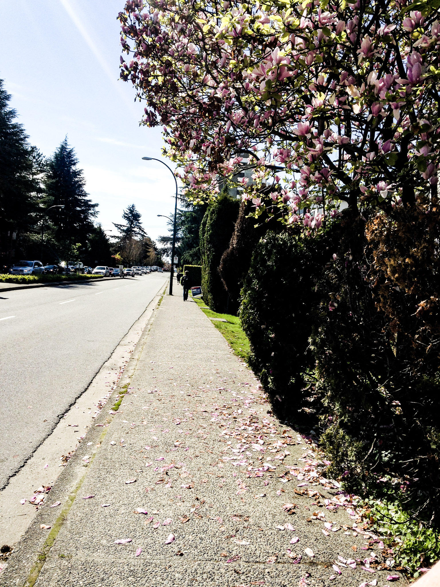 Cherry Blossom Season in Vancouver