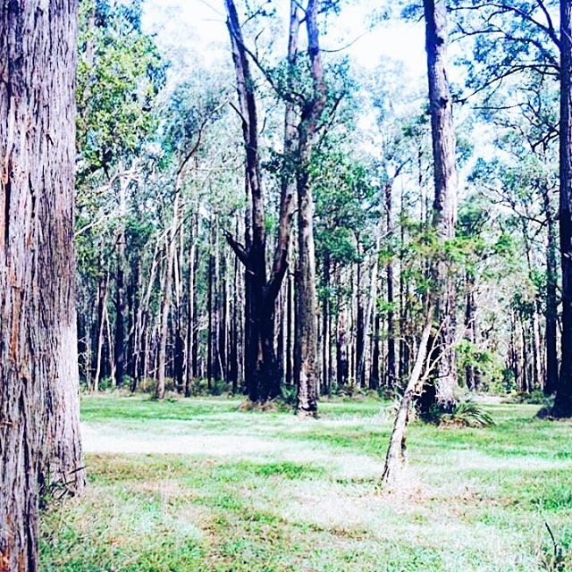 Flash Back Friday – A Picnic In The Dandenong Ranges