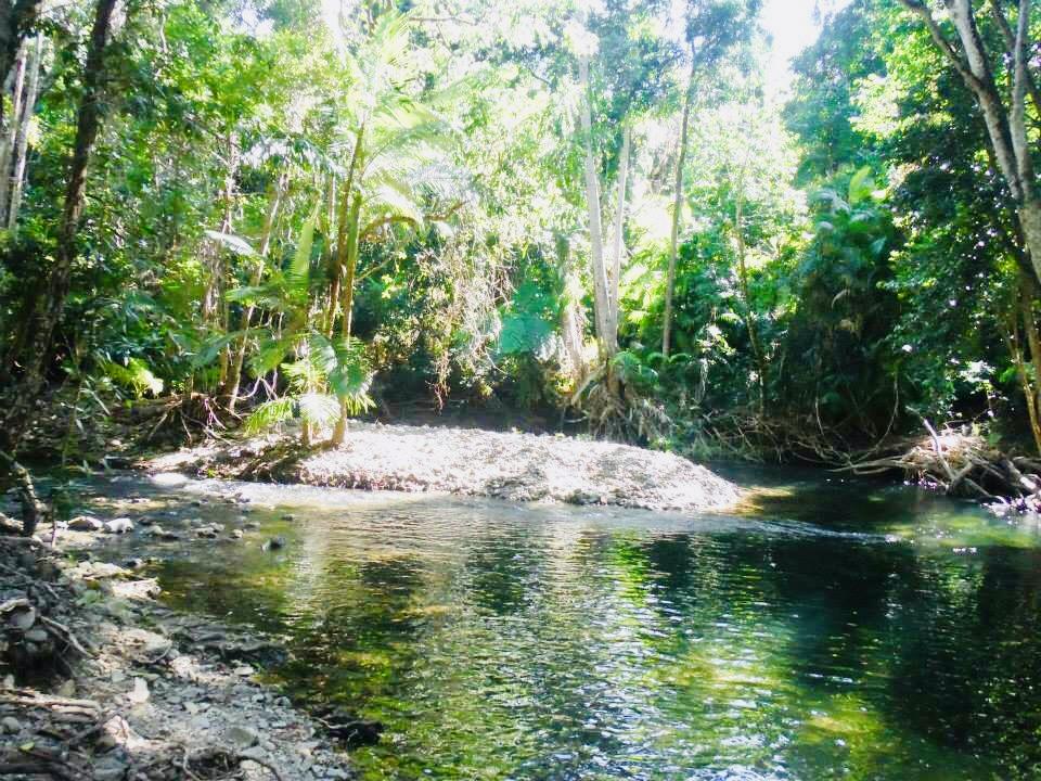 Daintree Rainforest Billy Tea Safaris