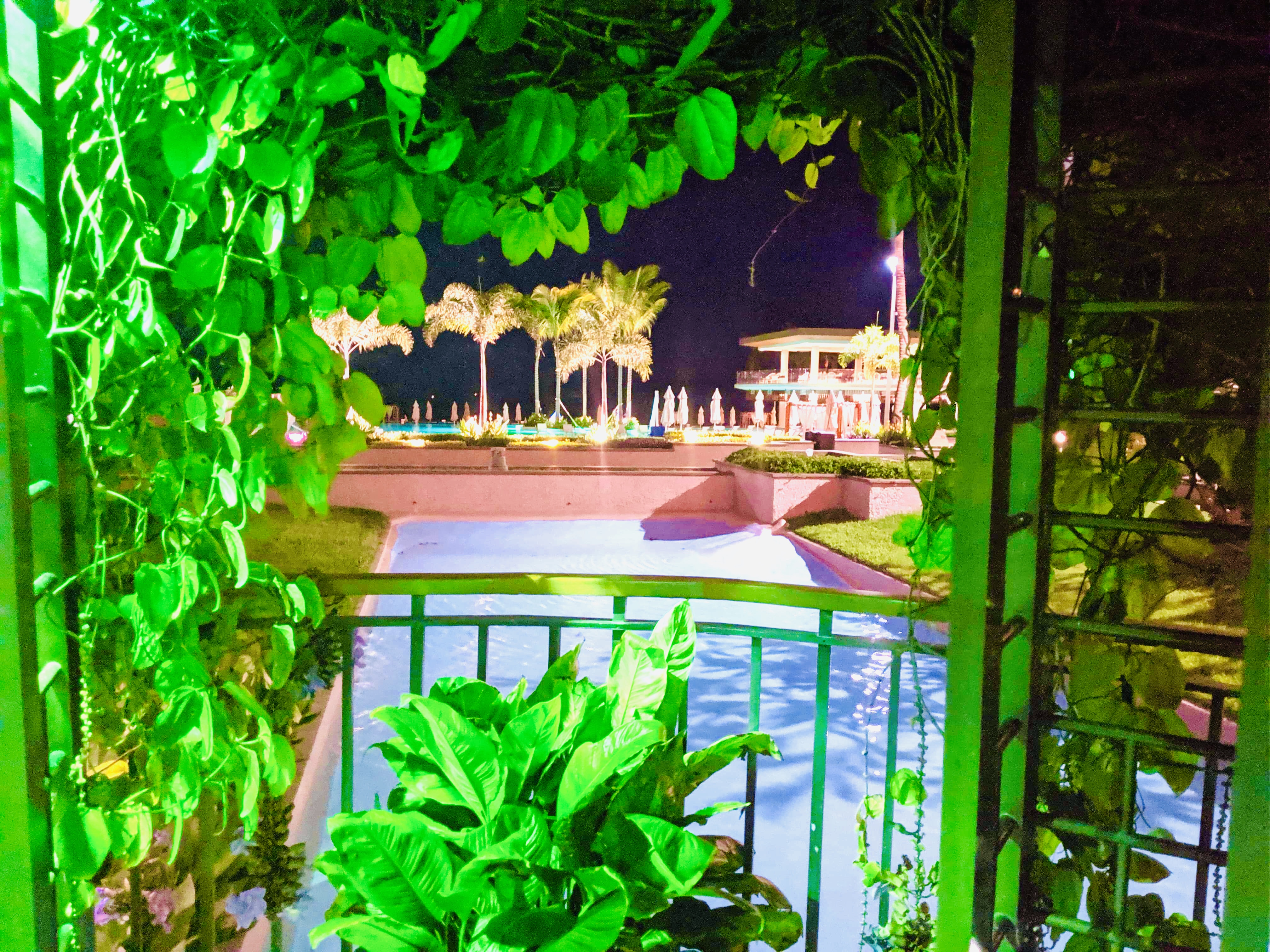 View of the pool area at night, from inside a viewing area covered in plants