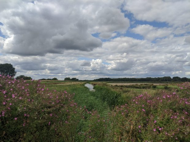buckenham_marshes_norfolk