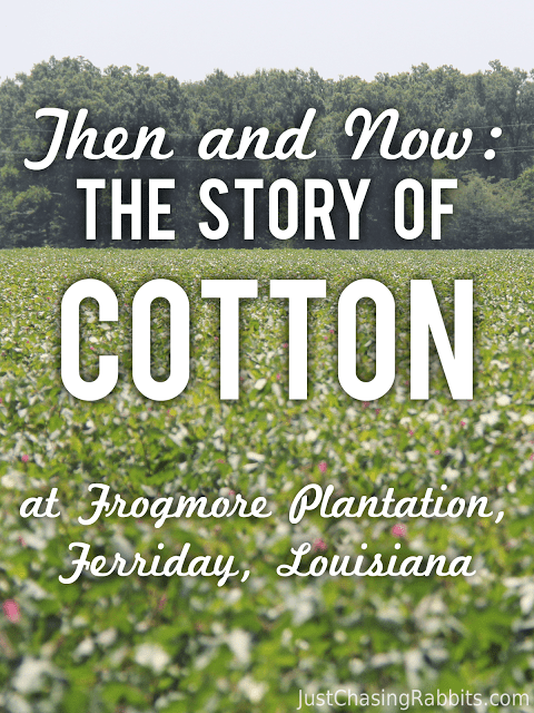 Story of Cotton at Frogmore Plantation in Louisiana