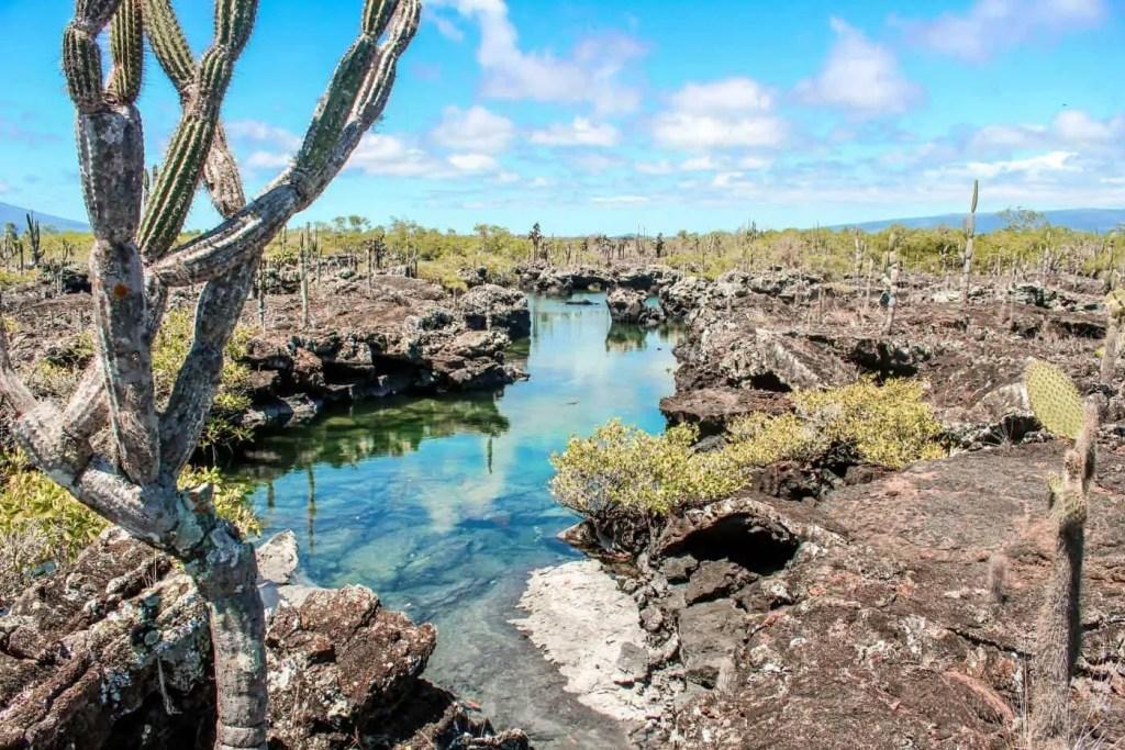 Los Tuneles Isla Isabela Galapagos