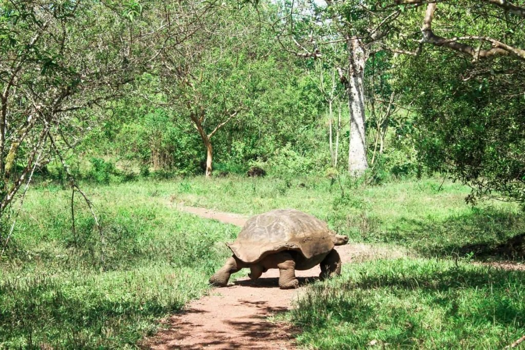 see the Giant Tortoises on the Galapagos Islands