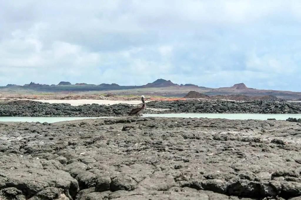Bird Resting on the Lava Rocks