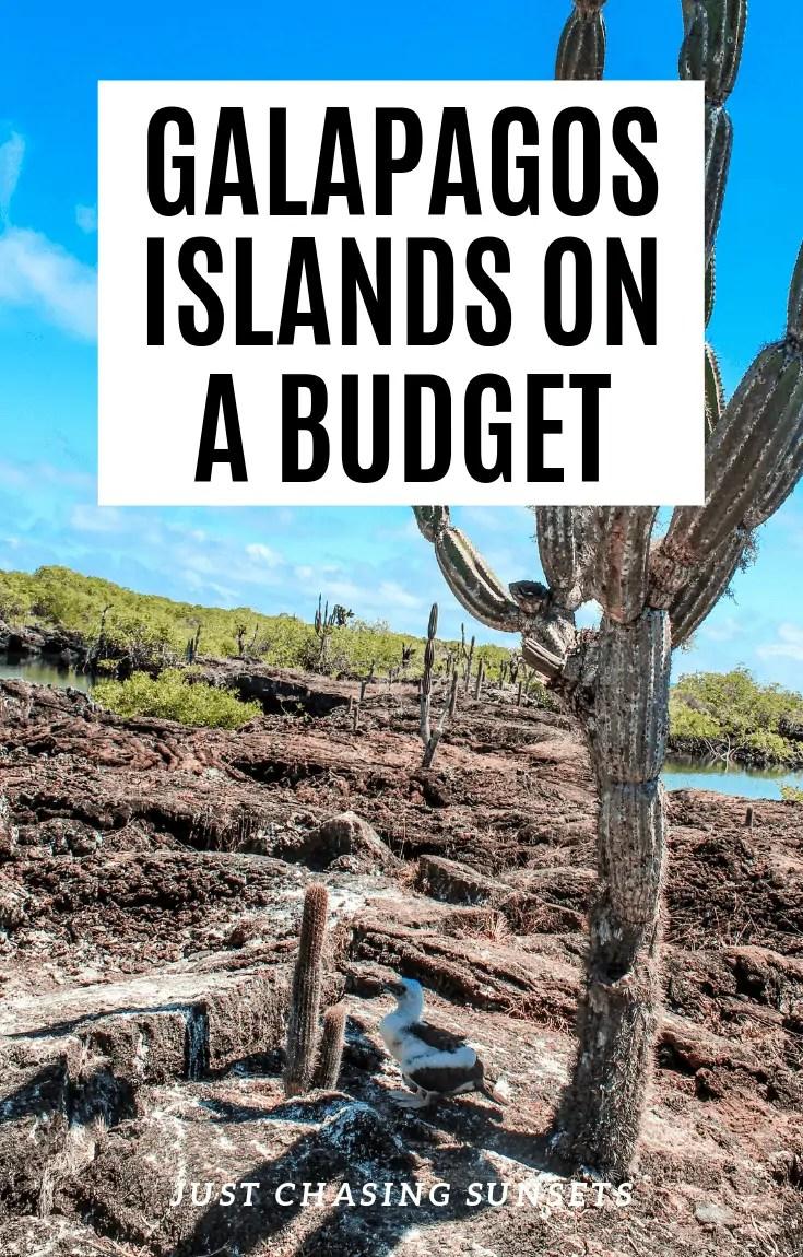 DIY Galapagos on a budget