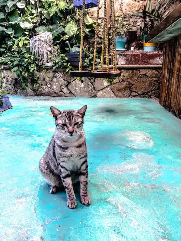 hostel cat