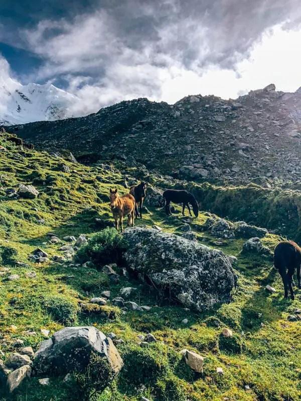 Horses on Way to Salkantay