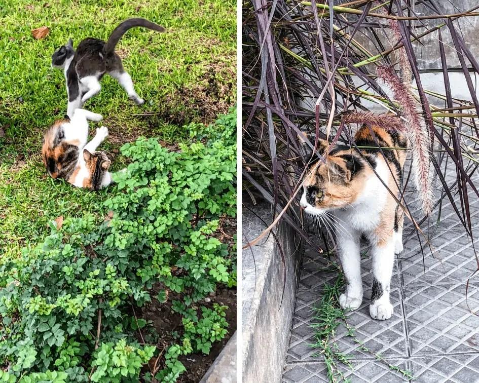 Cats of Parque Kennedy in Miraflores - Lima Peru