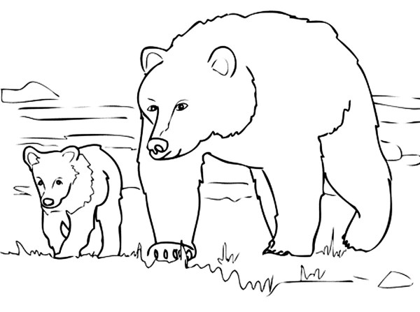 coloring pages of bears # 62