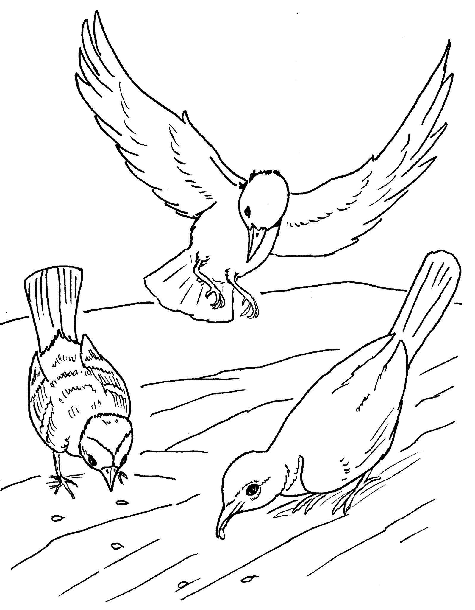 Birds To Print For Free
