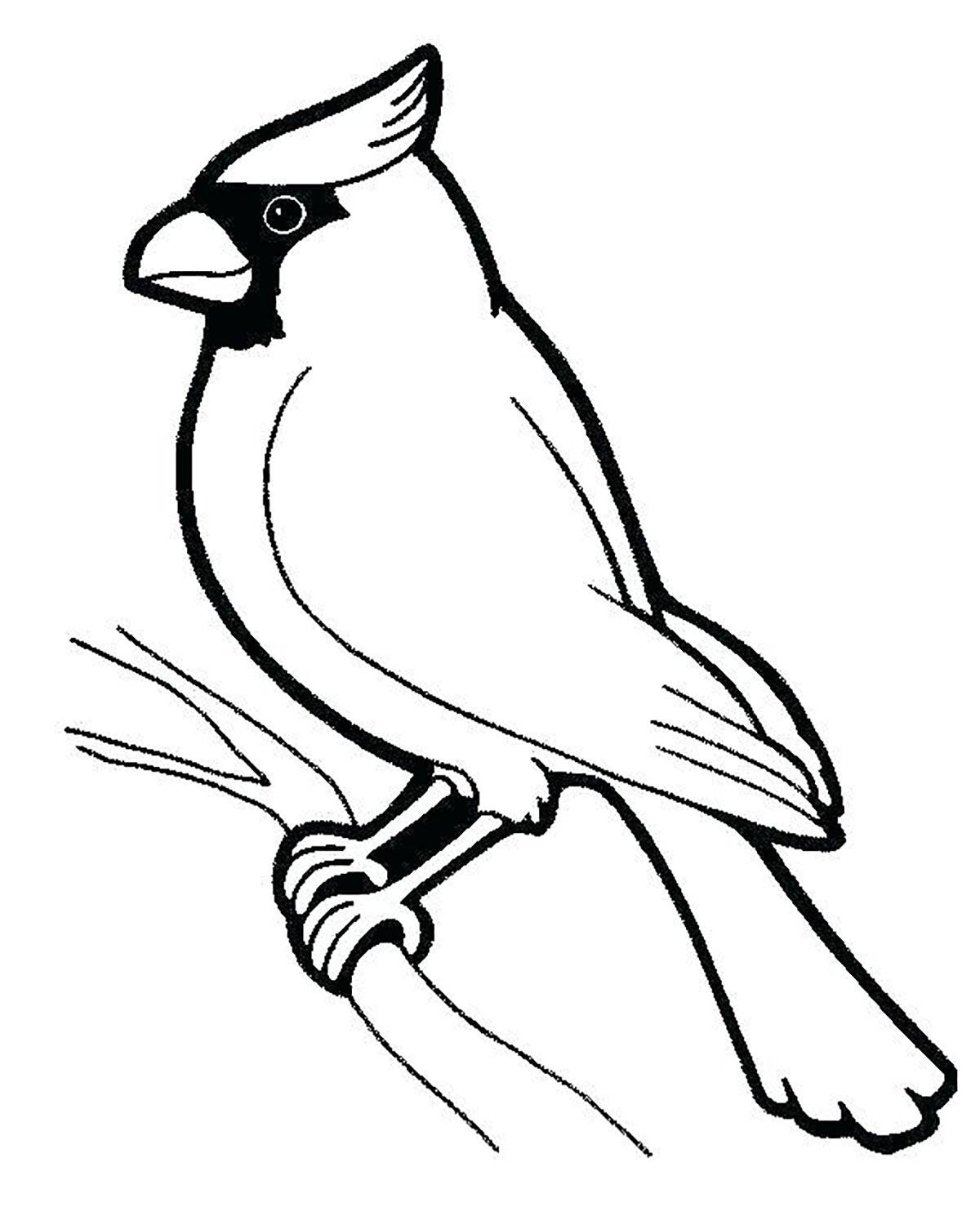 Birds To Download