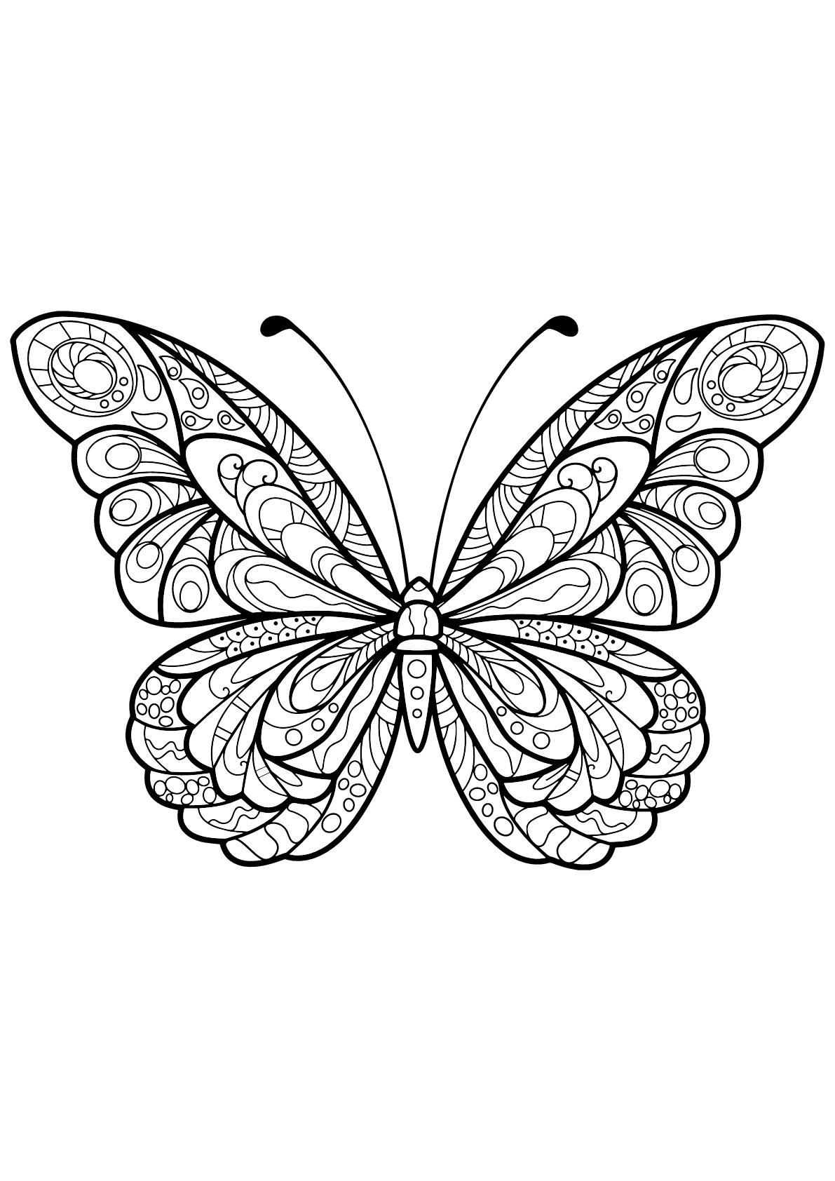 Butterflies For Children