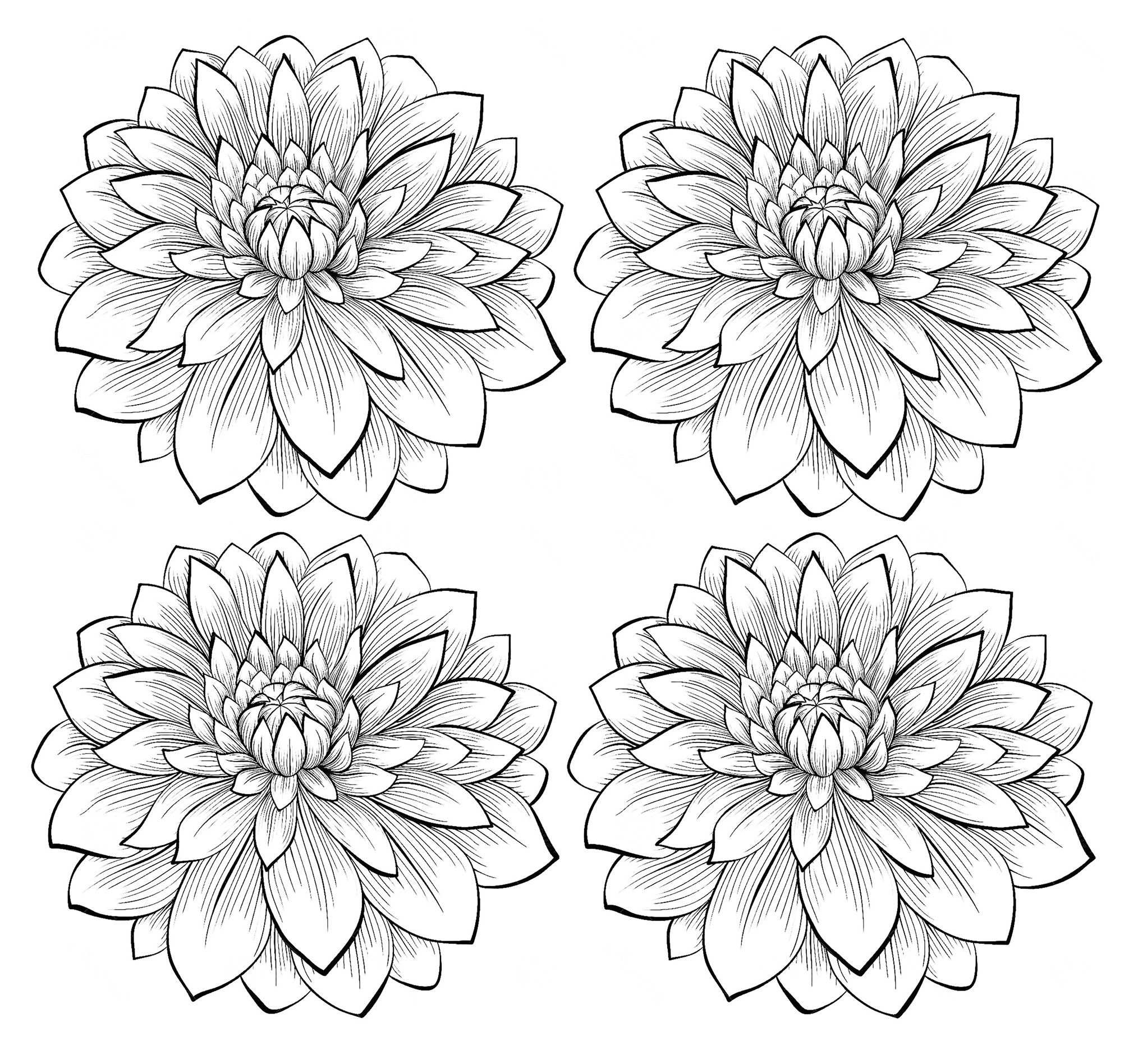 Flowers To Download
