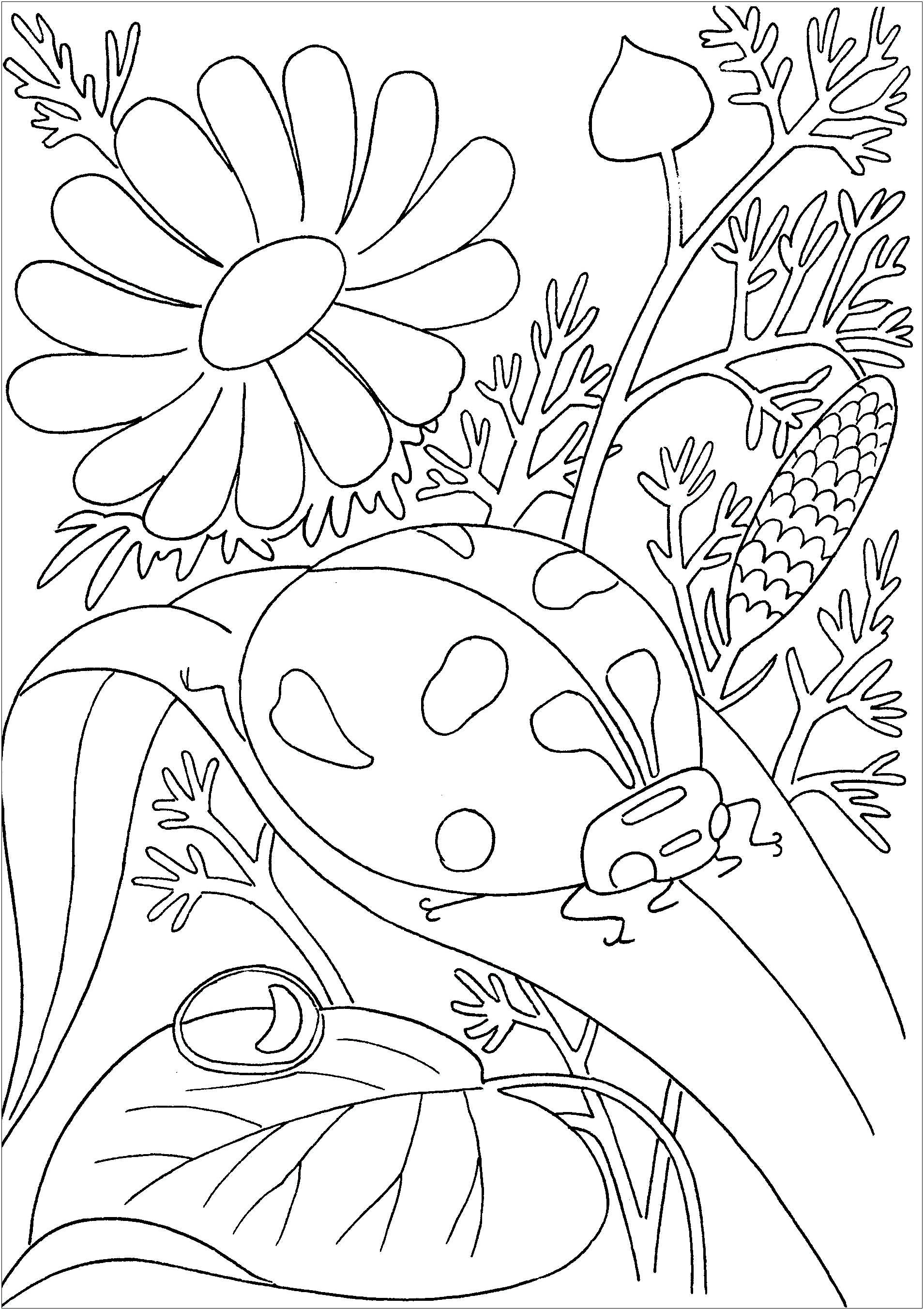Insects To Color For Kids