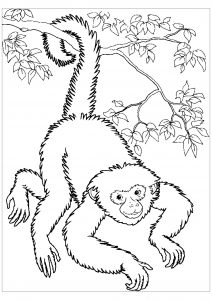 coloring pages of monkeys # 12