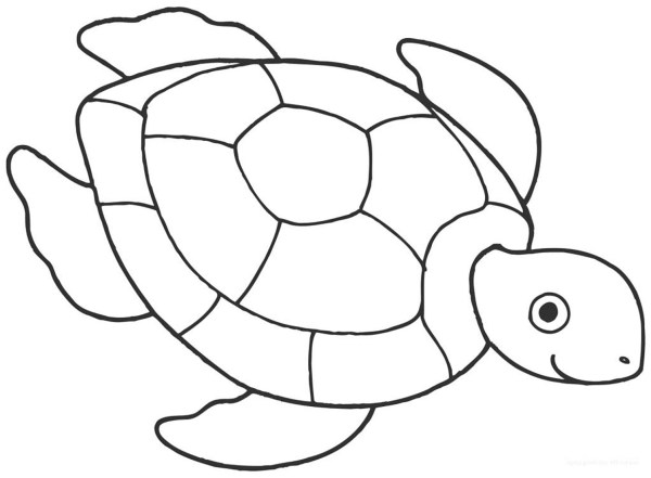coloring pages turtle # 6