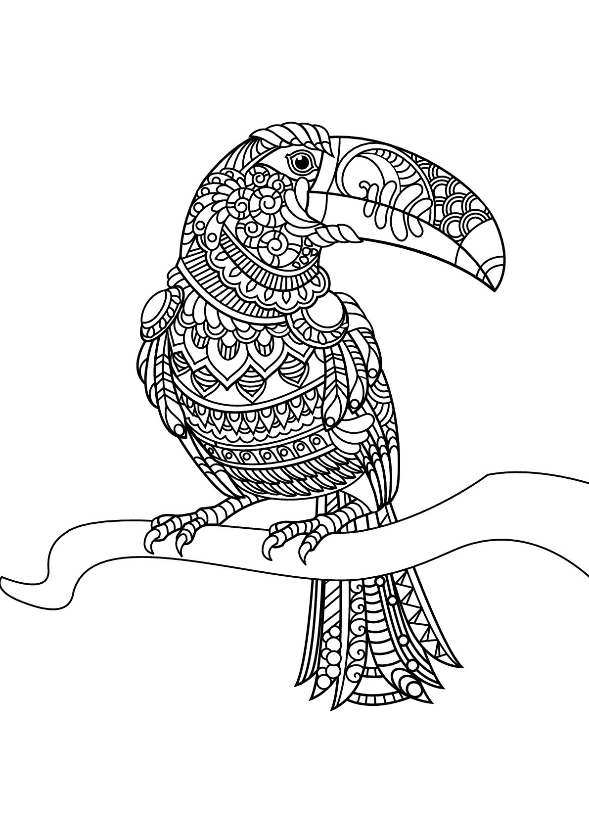 Free book toucan - Birds Adult Coloring Pages | free printable coloring pages for adults animals