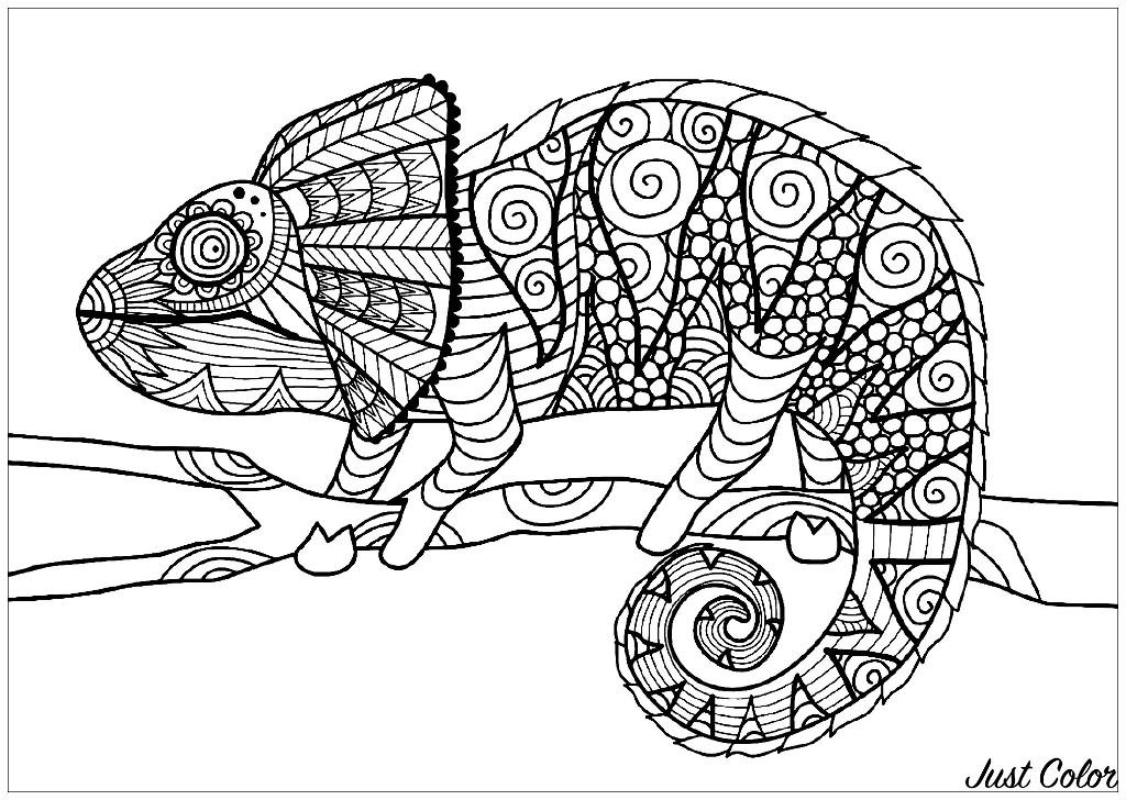 Chameleon On Branch Chameleons Lizards Adult Coloring Pages