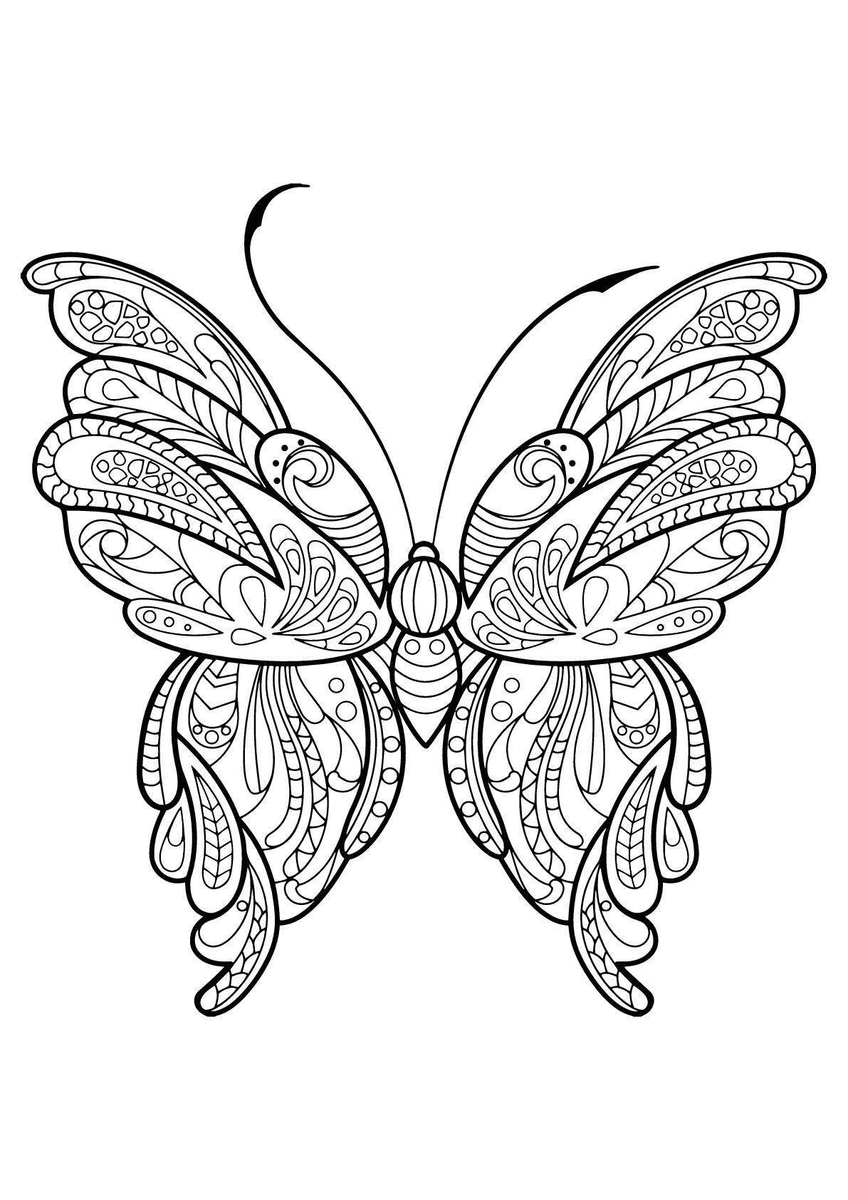 Butterfly Beautiful Patterns 16
