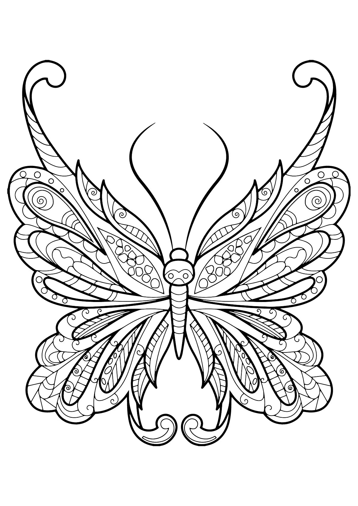 Butterfly Beautiful Patterns 18