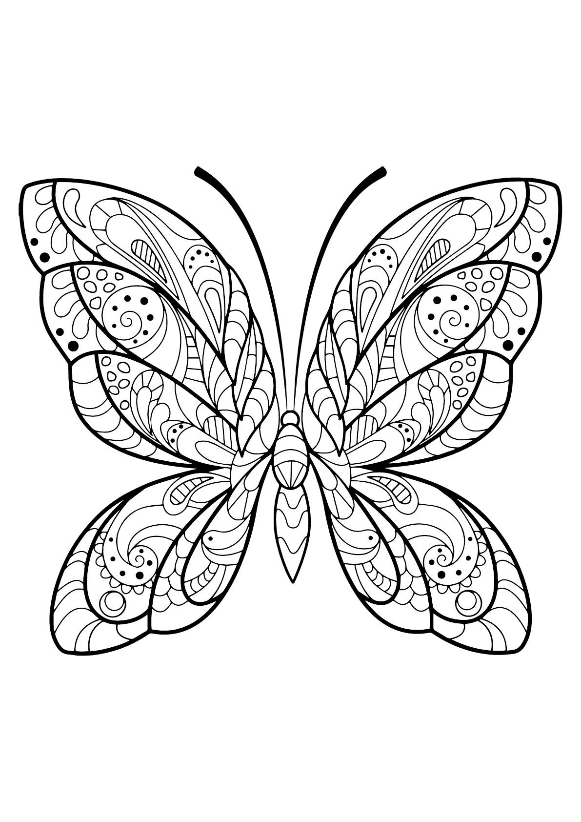Butterfly Beautiful Patterns 2