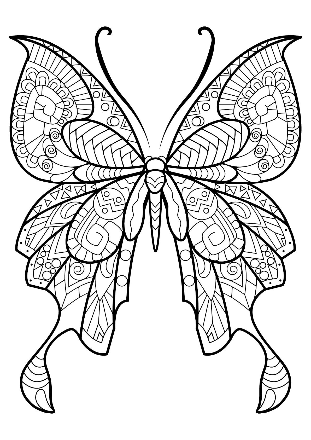 Butterfly Beautiful Patterns 8