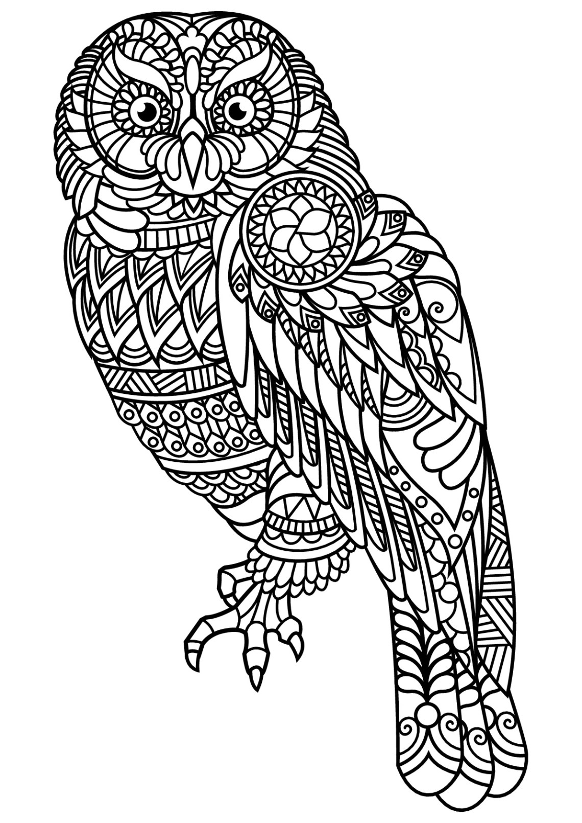 Free book owl - Owls Adult Coloring Pages | free printable colouring pages for adults animals