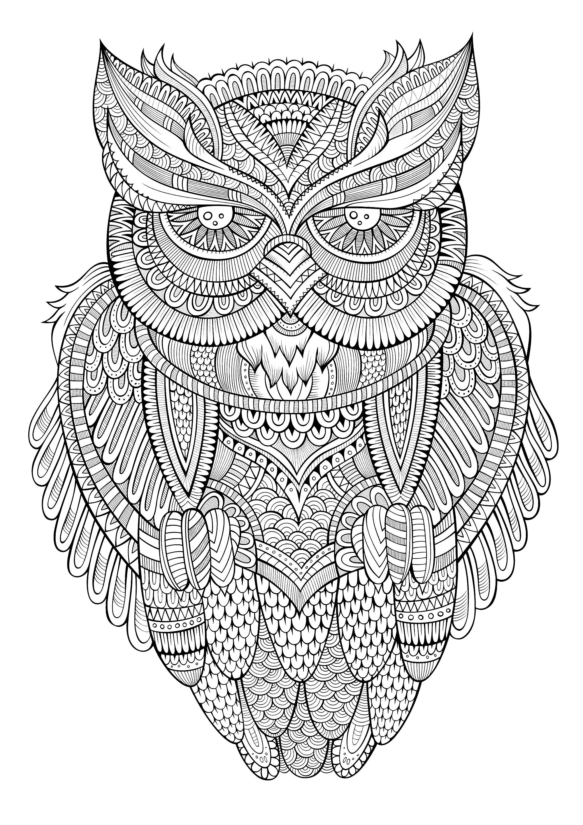 Peaceful Owl Owls Adult Coloring Pages