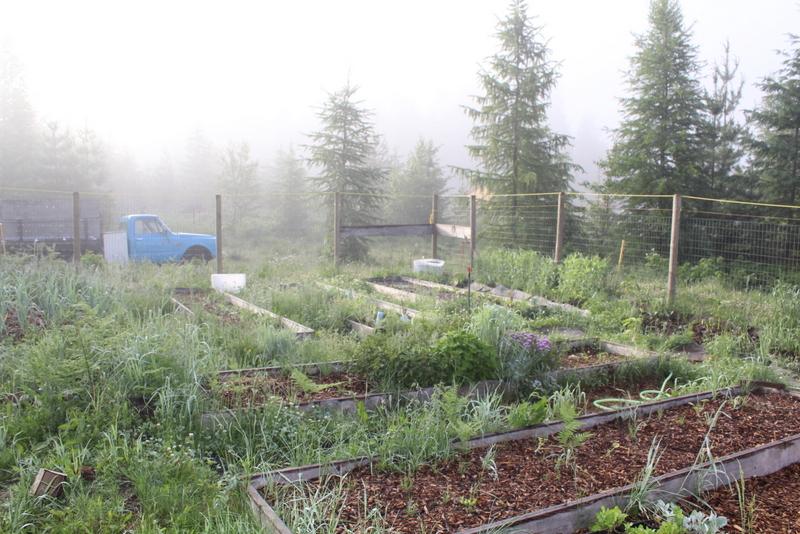 Homestead and garden pics