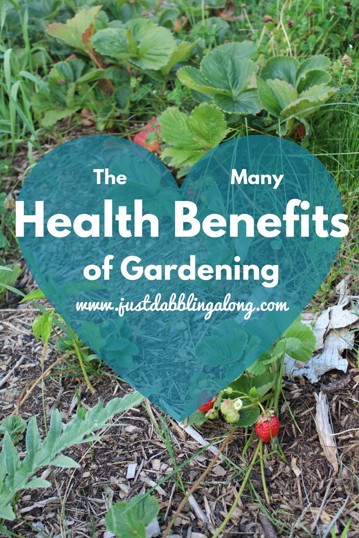 click here to read about many wonderful health benefits we get from just going out into the garden for awhile.