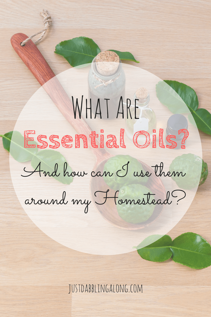 You may be wondering what are essential oils and how can I use them around my homestead. This article is full of useful information.