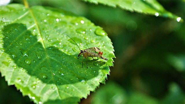 6 Plants to Keep Mosquitoes at Bay This Rainy Season