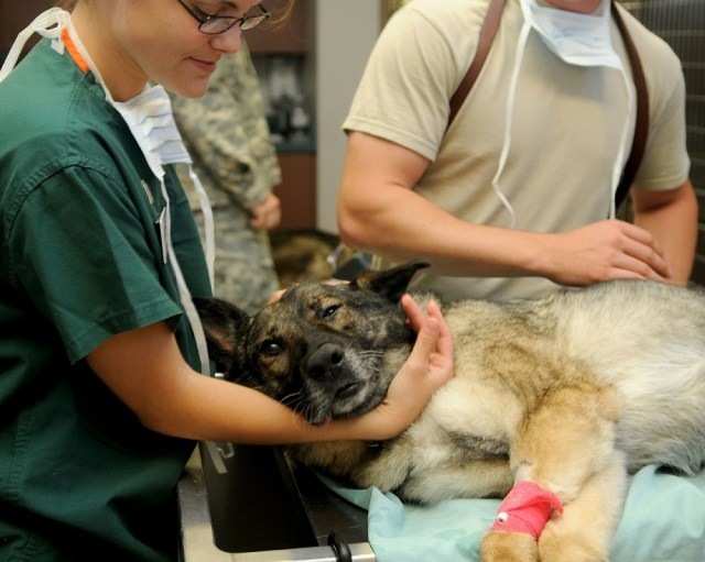Is It Hard to Become A Veterinarian?