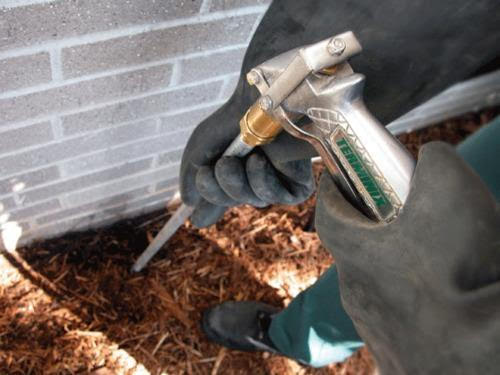 Few Tips to choose the best termite control service.
