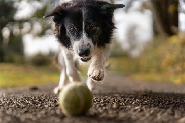 3 Tips To Help Your Pet Live a Long Healthy Life