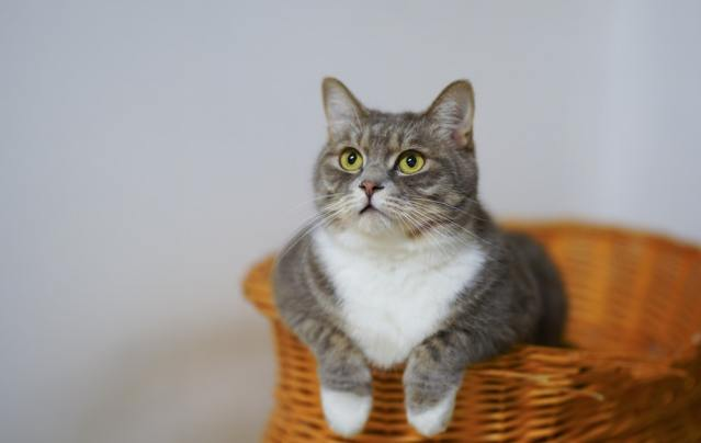 How to Prepare Your House for A New Cat