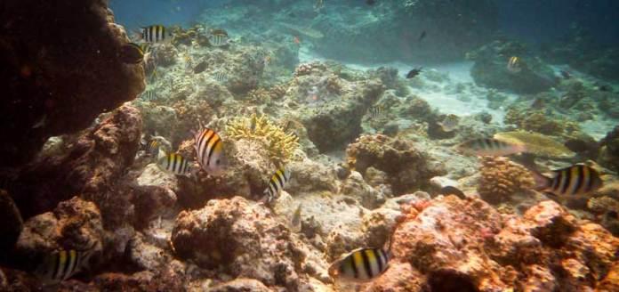 underwater-beauty-island-kalimantan-justgoindonesia-indonesia-travel-maratua-2