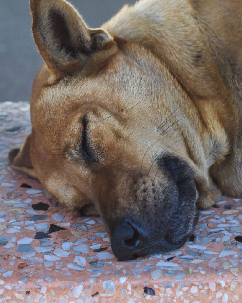 Karon View point dog face