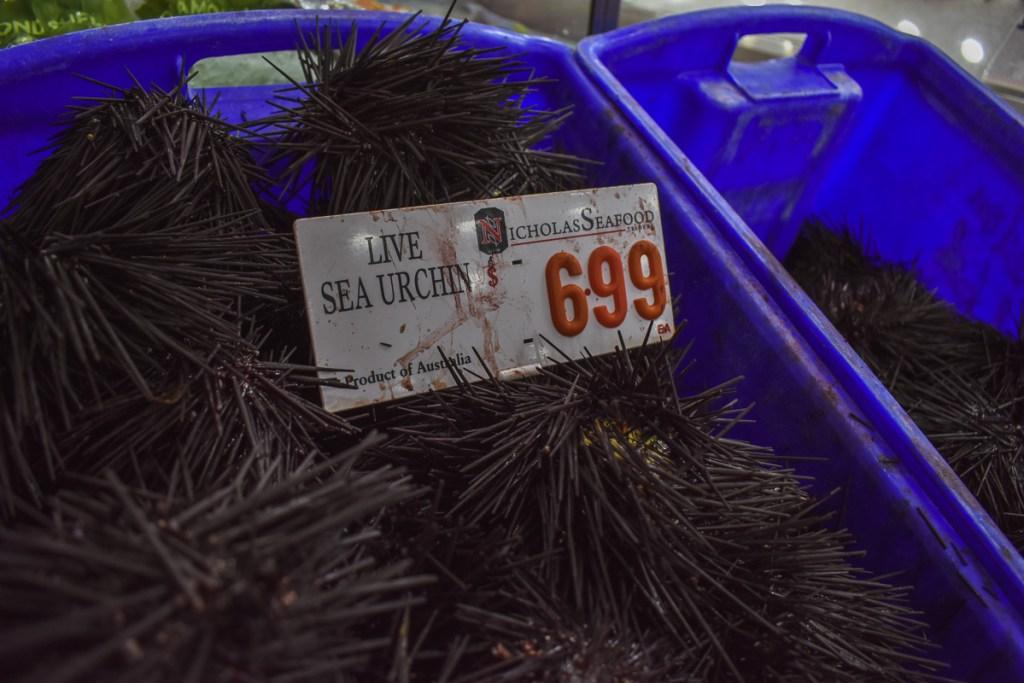 Live sea urchin