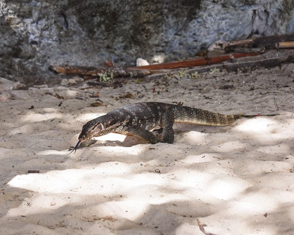 monitor lizard phra nang beach