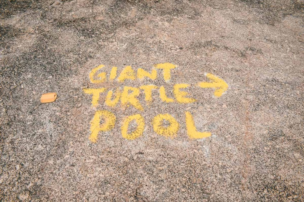 giant turtle pool at granite gorge