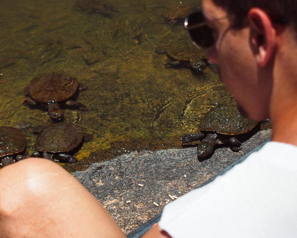 Woody watching turtles feed on rocks at turtle pool