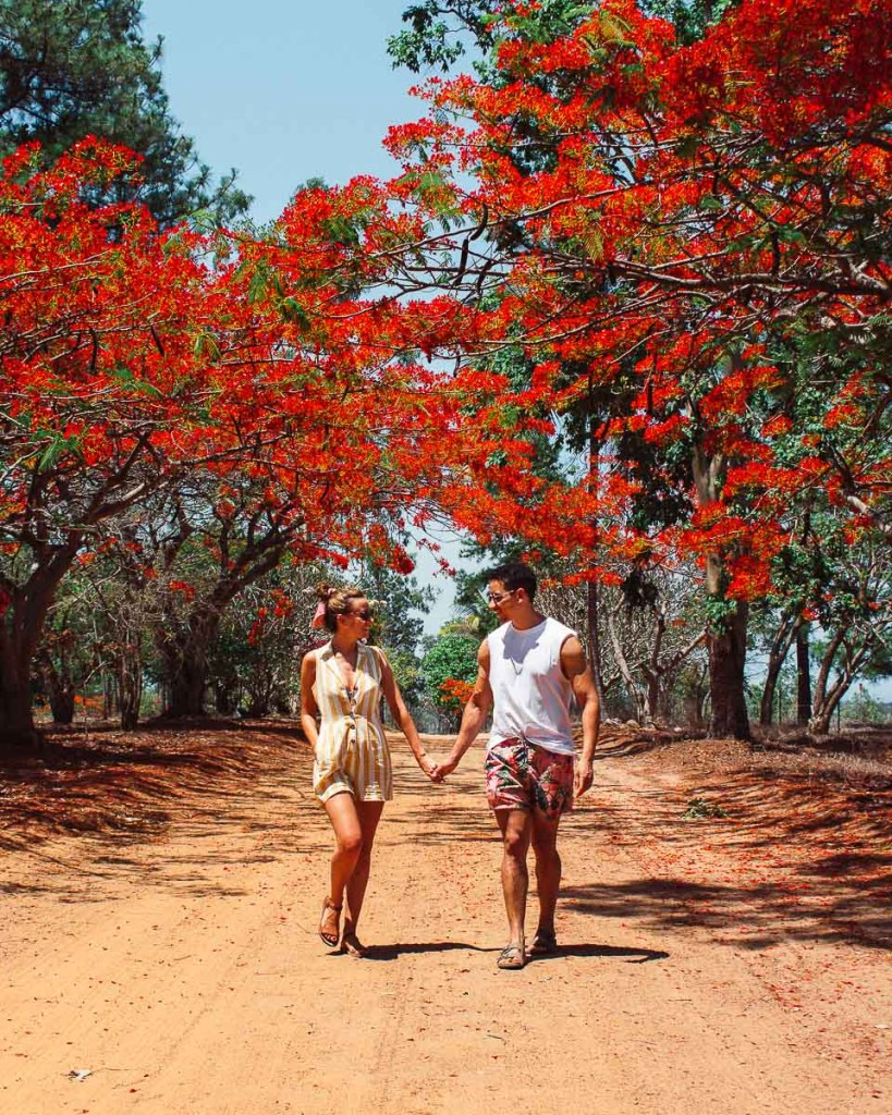 Kerrie and woody walking on red dirt with red flowers