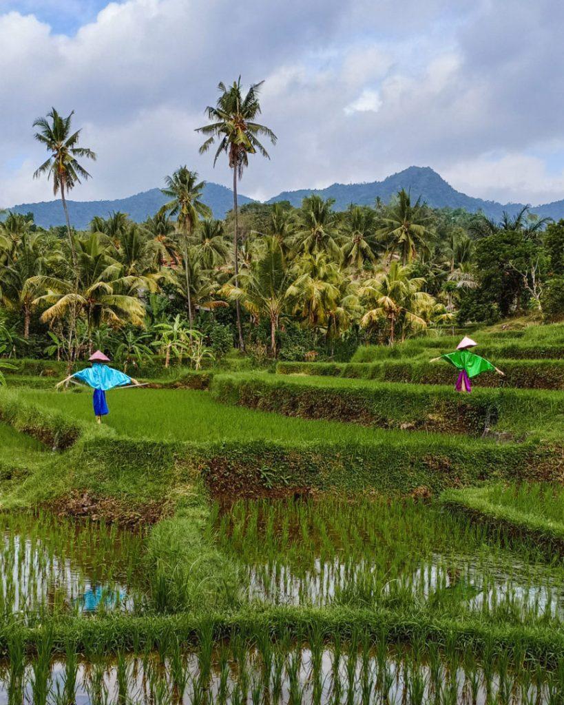 Munduk Drive Bali Scarecrow