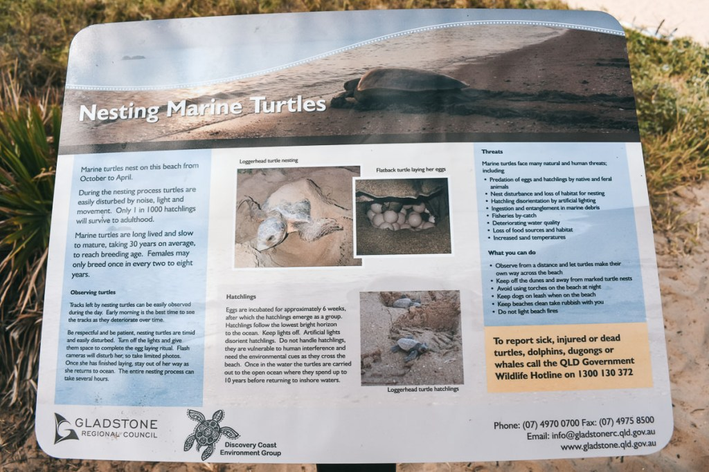 Agnes Water Beach hatchlings turtle sign
