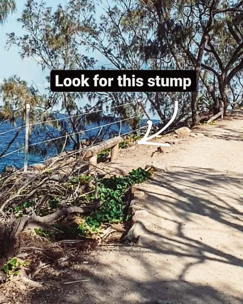 STEP 3: Look out for the wire fencing and wooden stump or the park bench near Picnic Cove