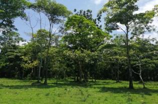 Área de protección y reforestación de Pedeguita y Mancilla