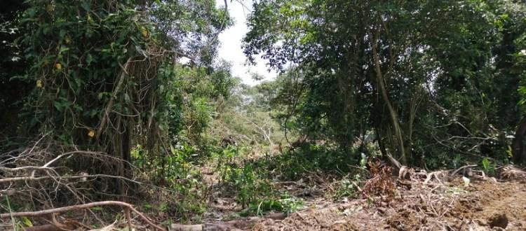 Bosque primario y secundario Pedeguita y Mancilla