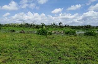 Canal que drena Ciénaga El Bajo de Los Patos Pedeguita y Mancilla